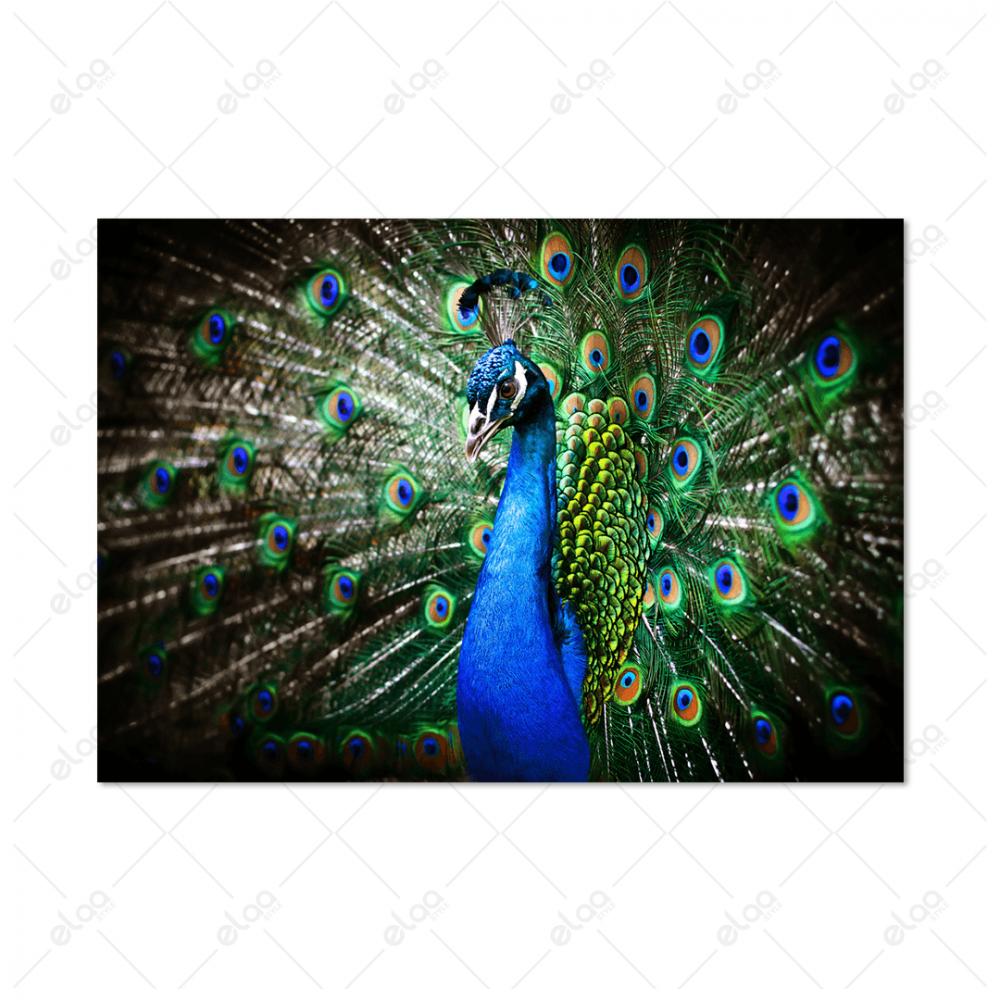 لوحة فنية منظر طبيعي لطاؤوس باللون الازرق والفيروزي