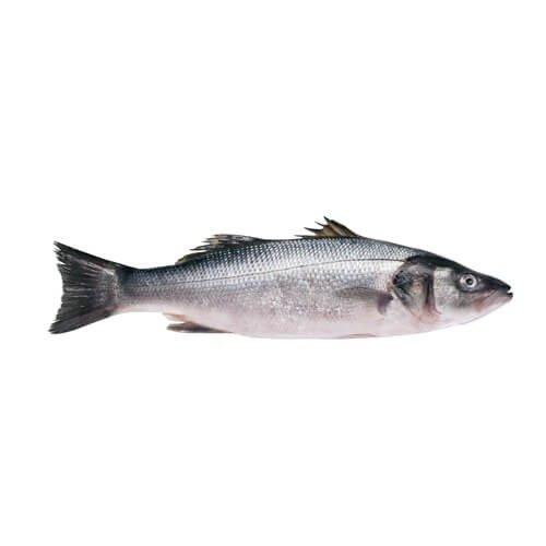 سمك عروسة البحر قاروص طازج سعود للأسماك