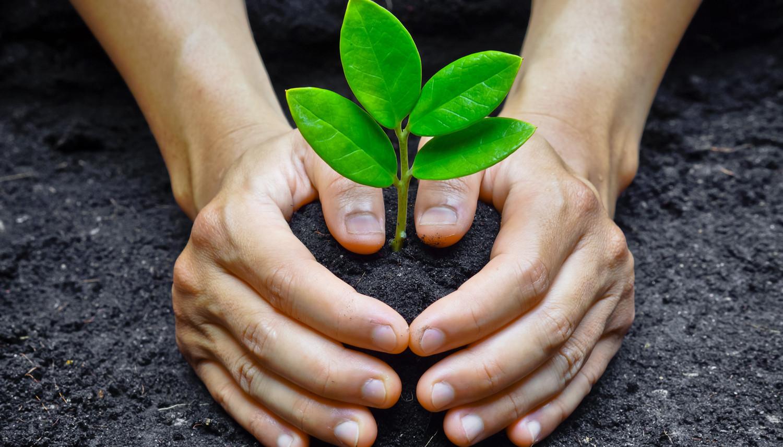 تربة زراعية ومستلزماتها