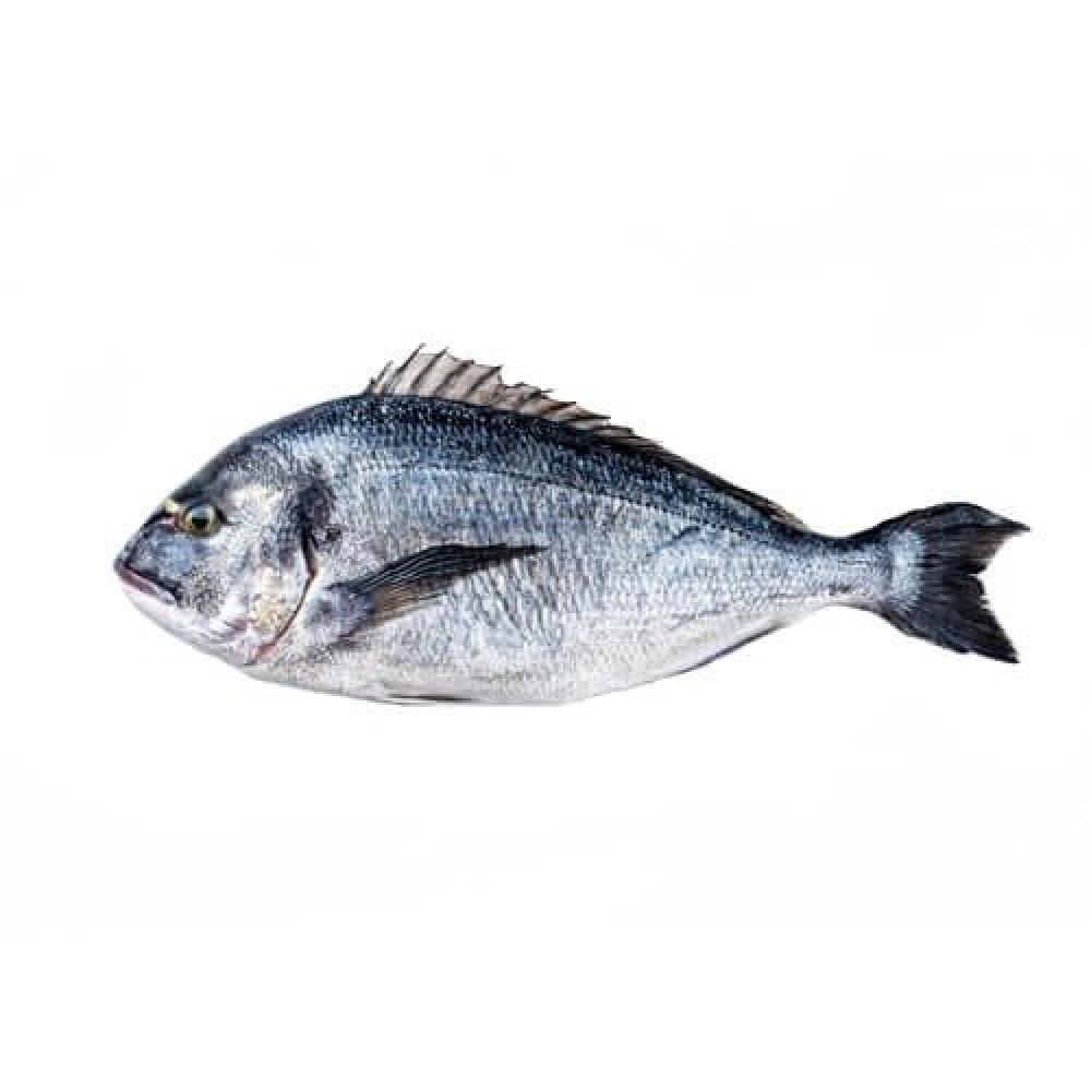 سمك دنيس SeaBream