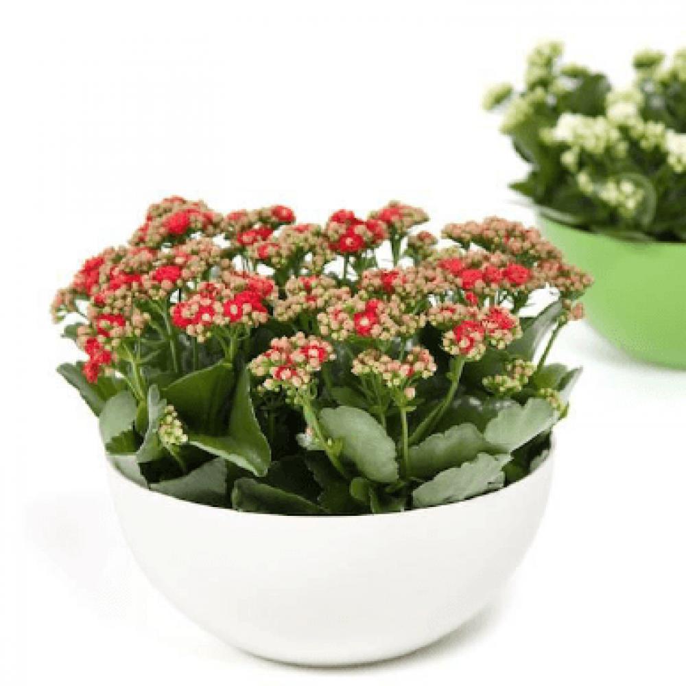 وعاء نباتات منزلية