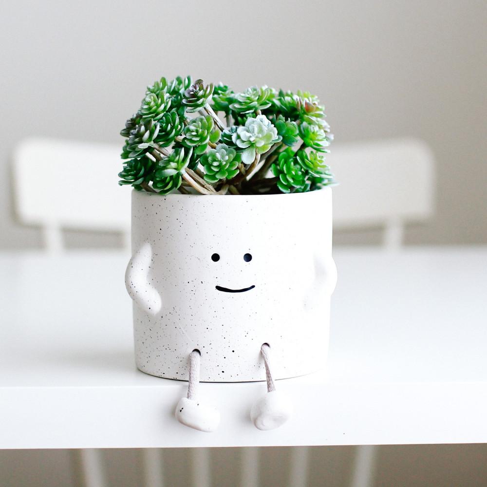 هدية للمكتب متجر هدايا نباتات إناء نباتاتي حوض نباتات نبتة داخلية