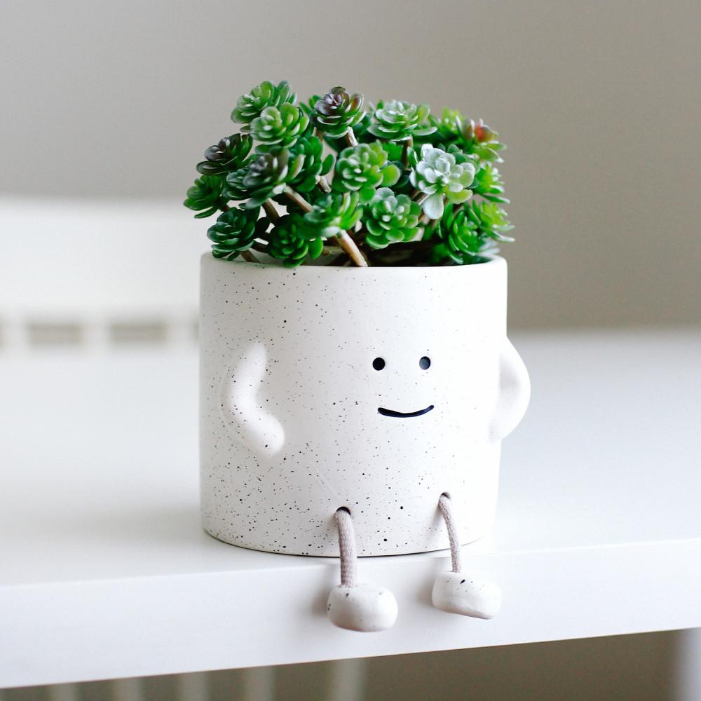 أفضل هدية للمكتب متجر توصيل هدايا إناء نباتات حوض نباتات نبتة داخلية