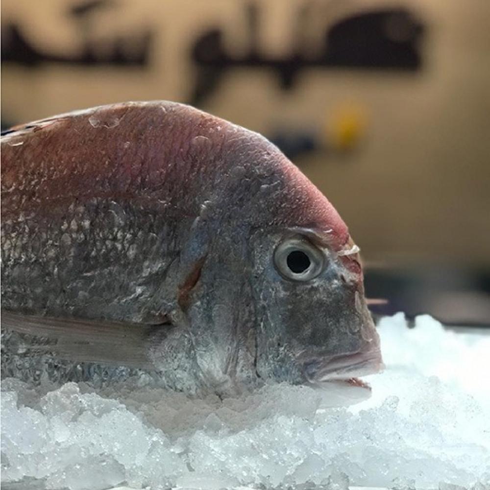 سمك عندق وسط-Andak M