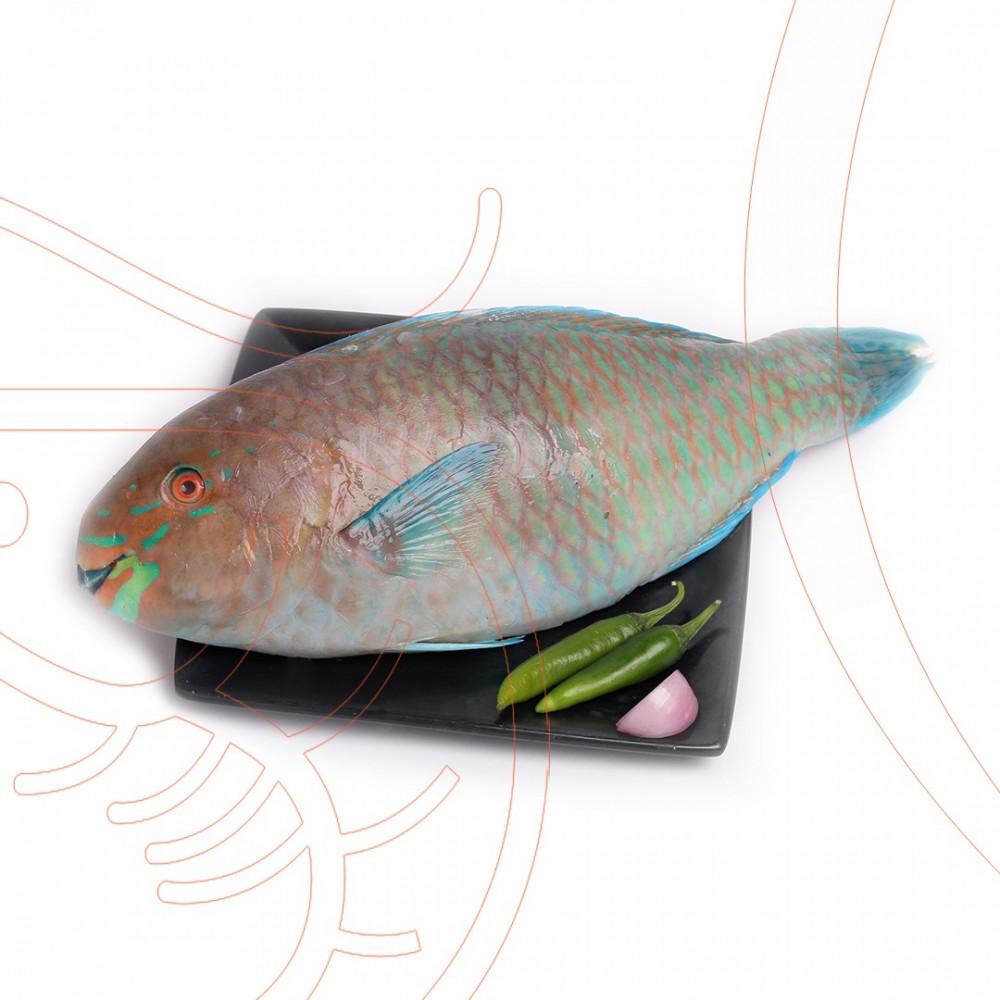 سمك حريد