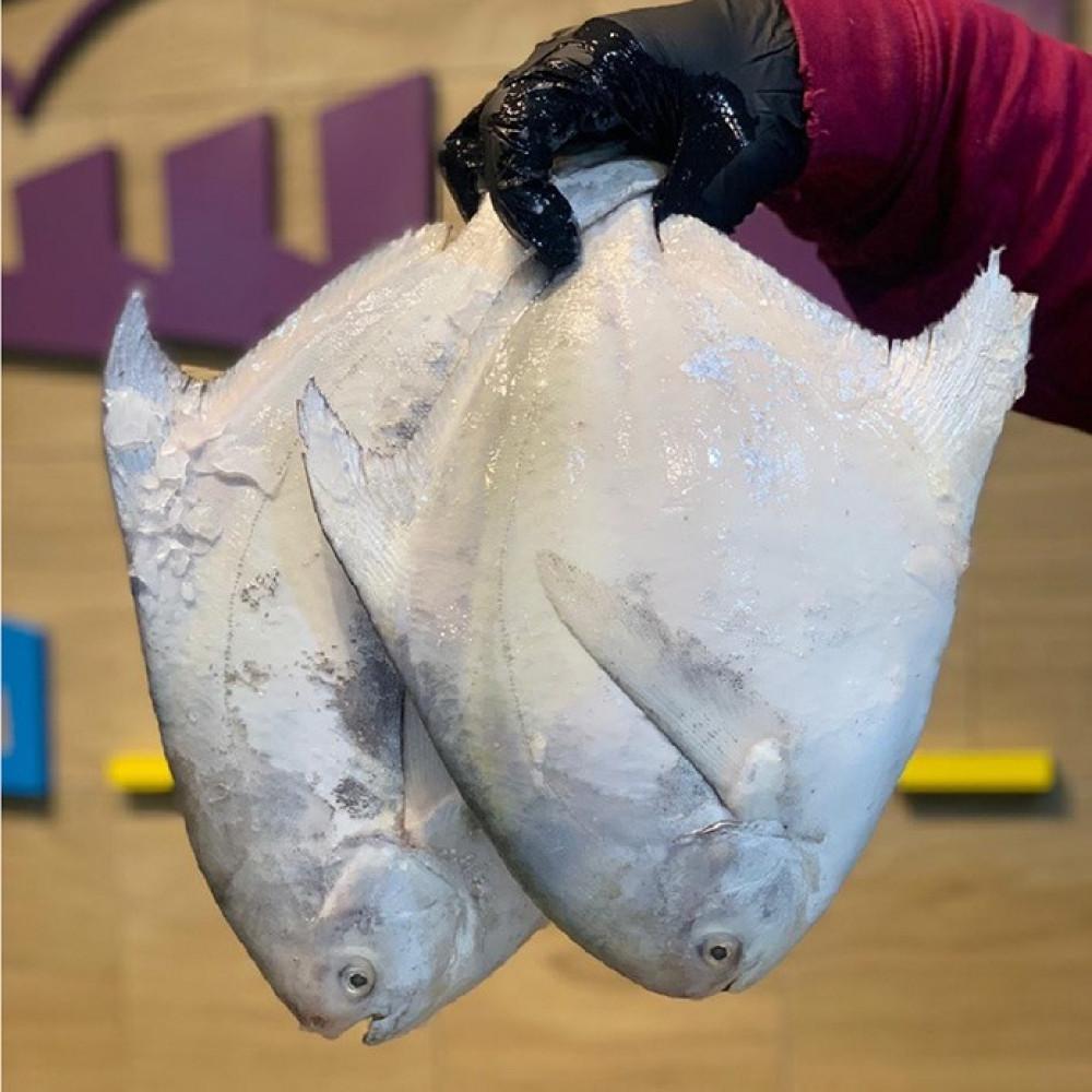 سمك زبيدي