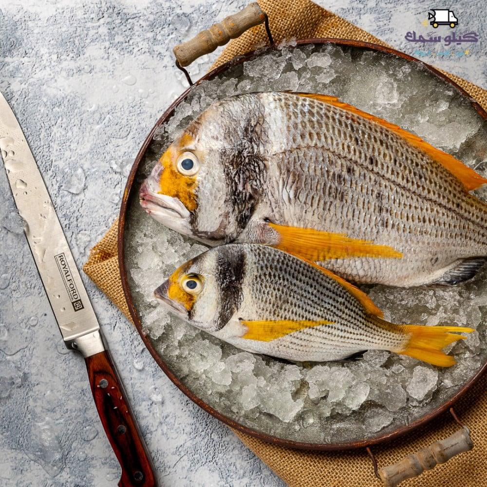 سمك فسكر
