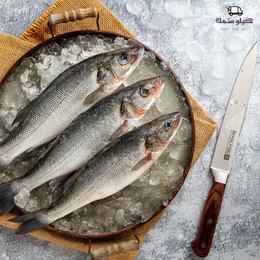 سمك سيباس