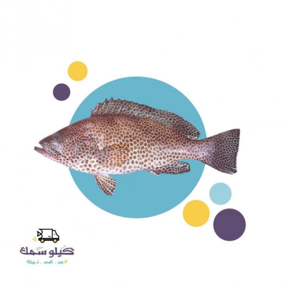 سمك سمان طازح
