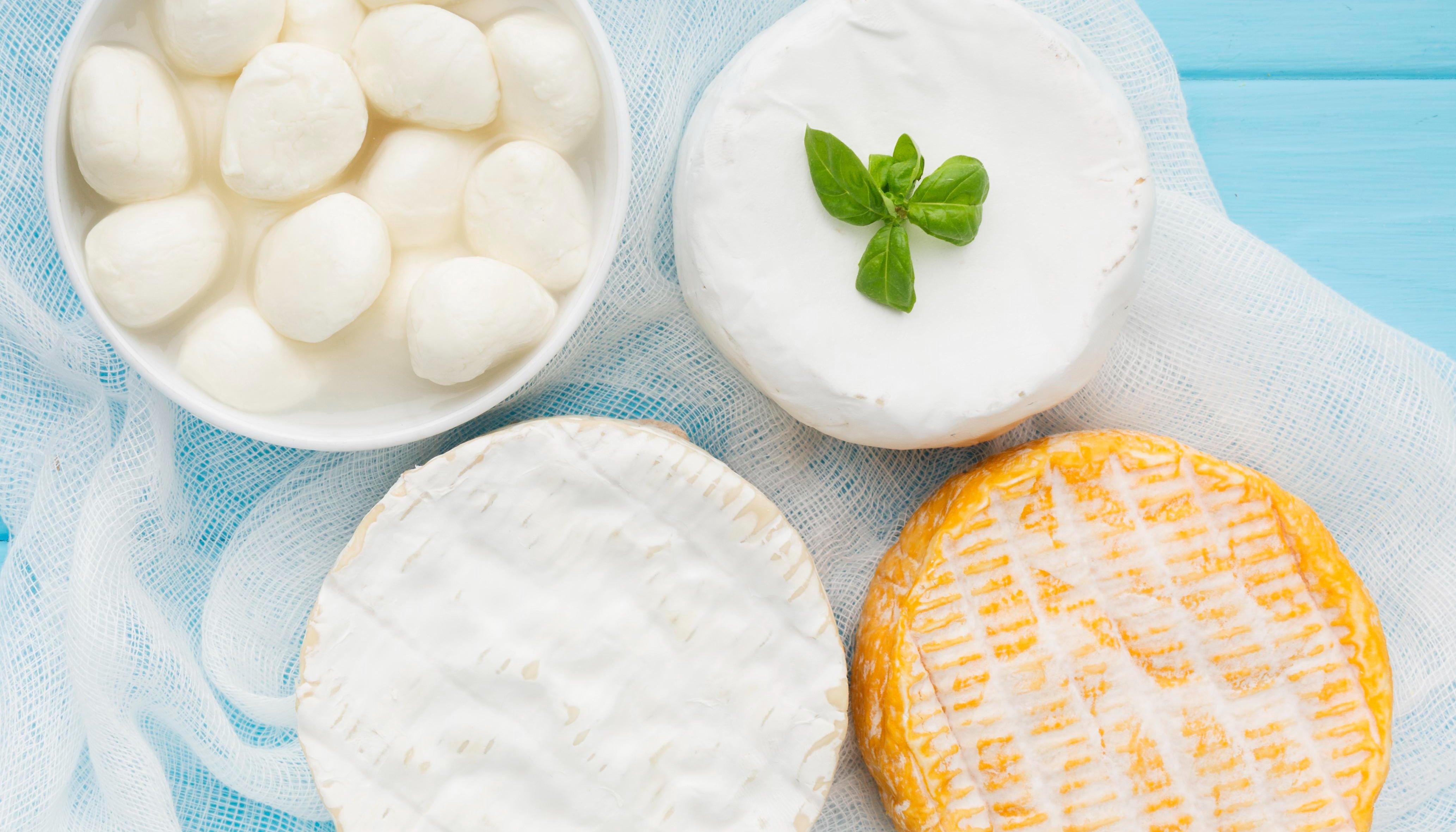 الألبان والأجبان milk and cheese