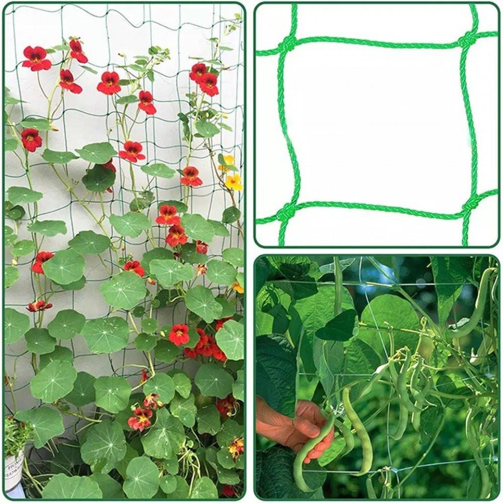 شبكة تسلق النباتات