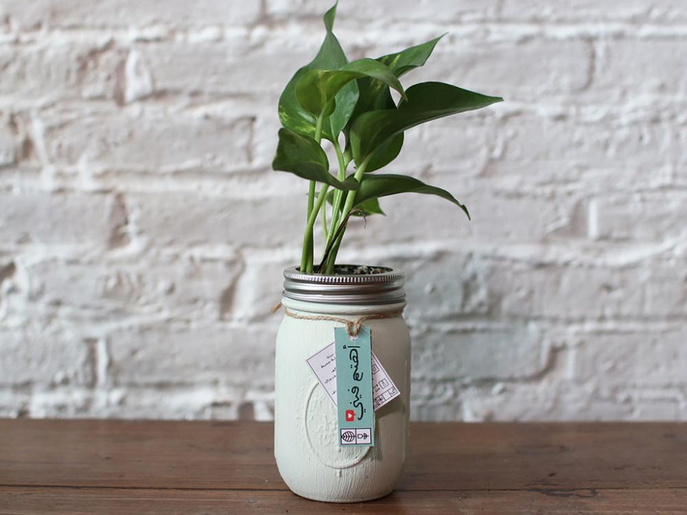 هدية نبتة بوتس الطبيعية نبتة الظل مناسبة للمكاتب سهلة العناية