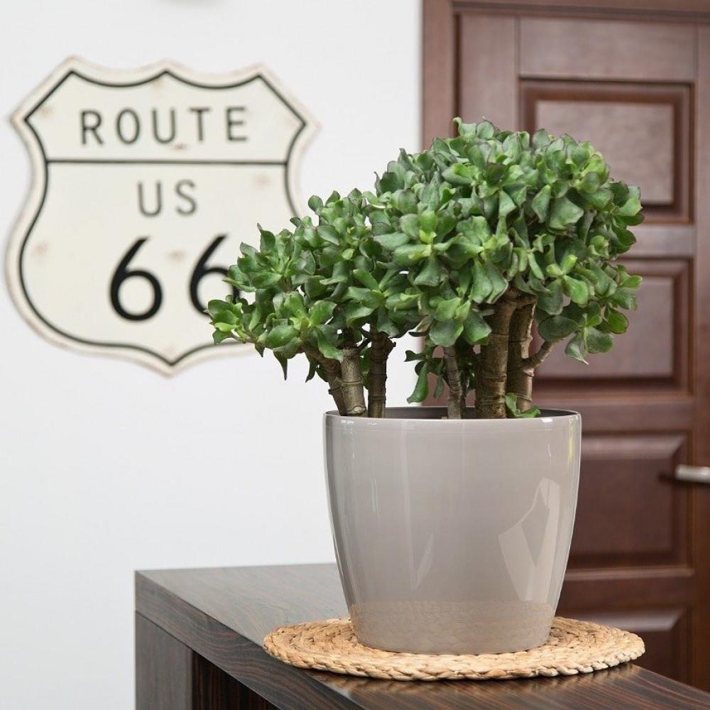 مركن ماغنوليا  لماع  للنباتات الداخلية 12سم بتصميم اوروبي