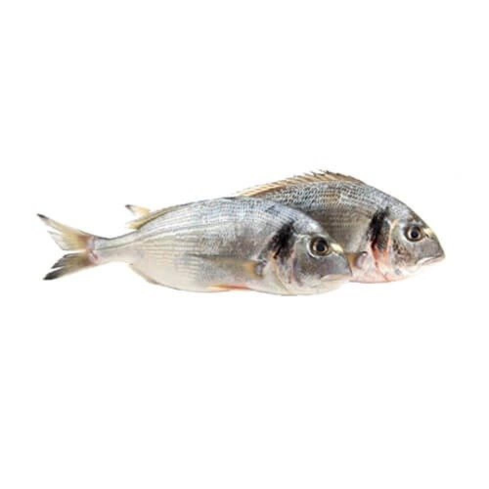 سمك دنيس طازج SeaBream