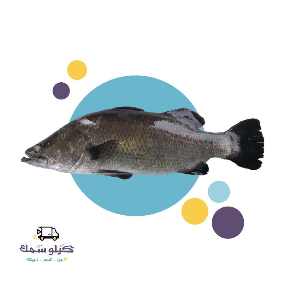 سمك عروسة -Barramundi
