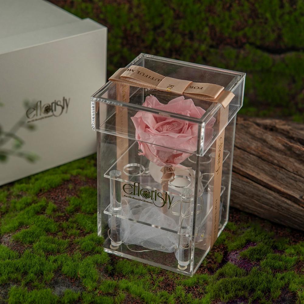 هدية وردة جوري طبيعية معالجة روز