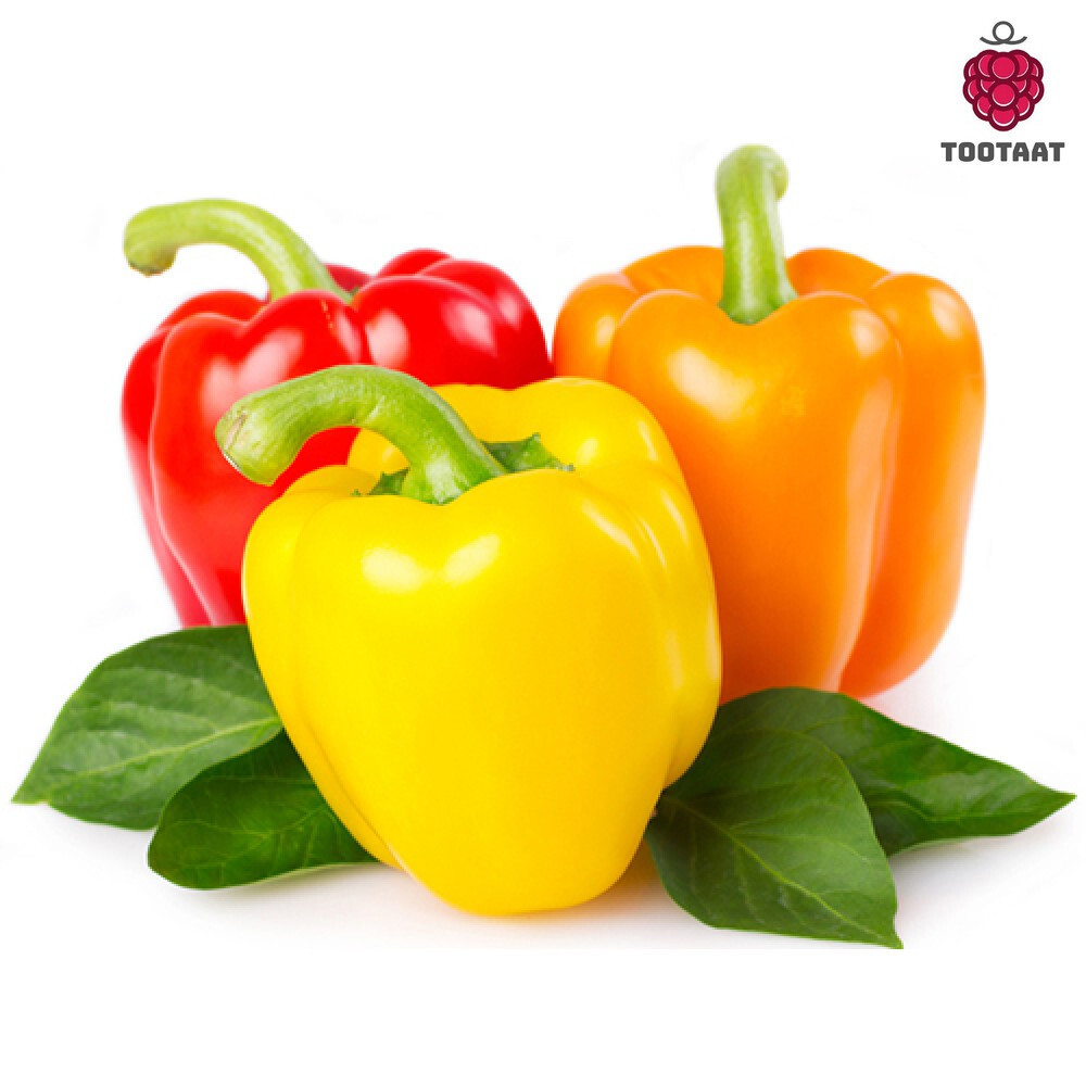 فلفل رومي ملون Colorful Bell Pepper