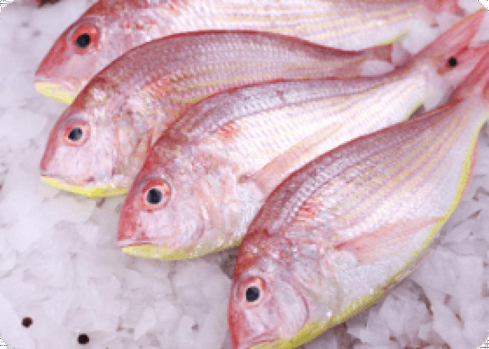 سلطان ابراهيم متجر صندوق سمكتي للأسماك الطازجة متجر اسماك في الرياض