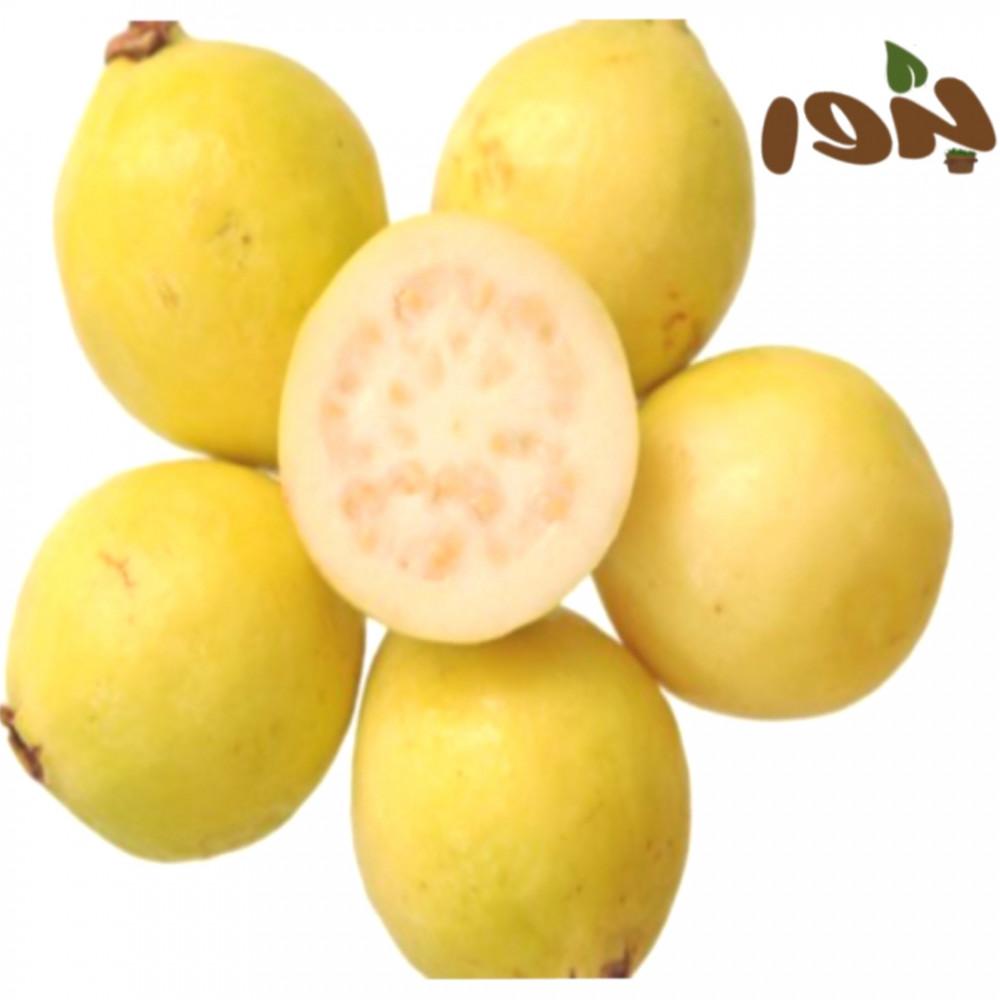 بذور الجوافة الصفراء-متجر بذور الزراعي