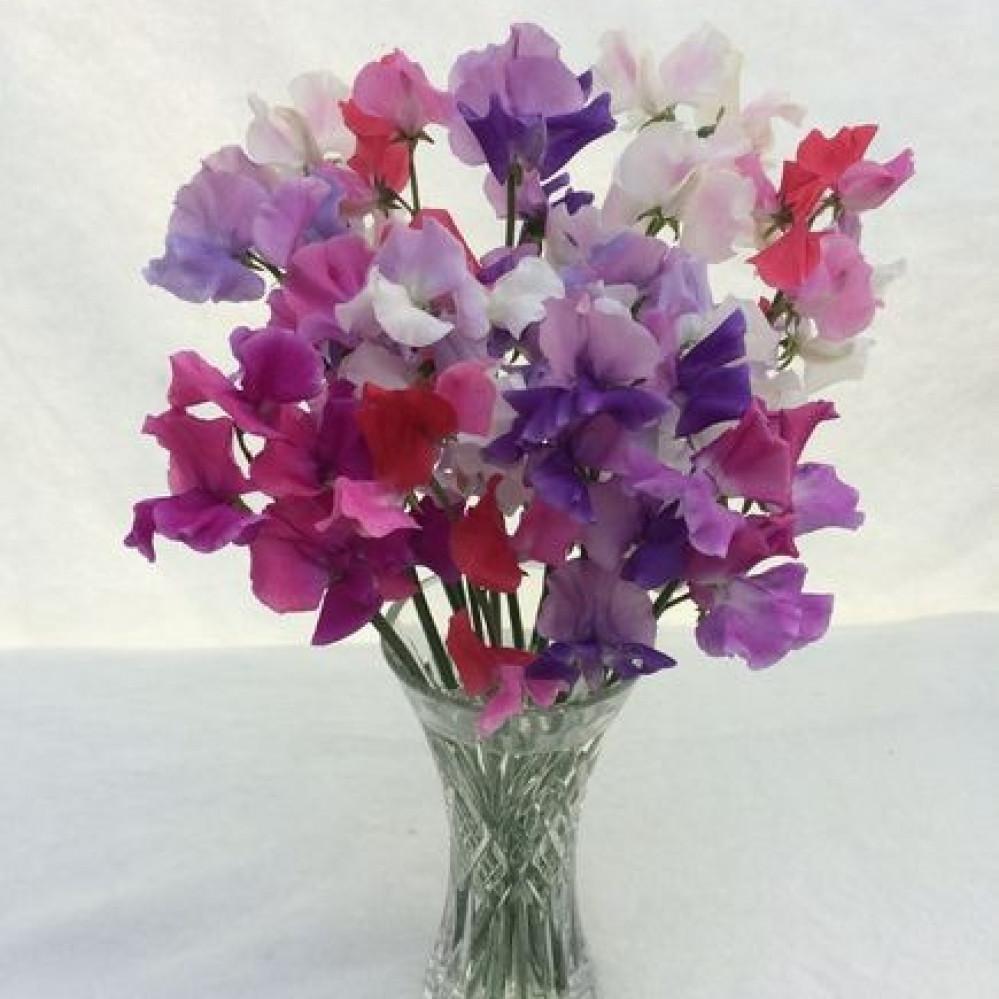 بذور بسلة الزهور-متجر بذور الزراعي