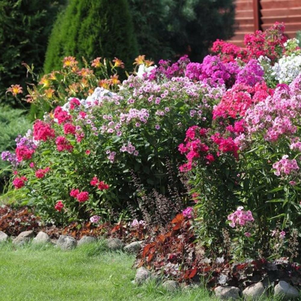 زهور الفلوكس