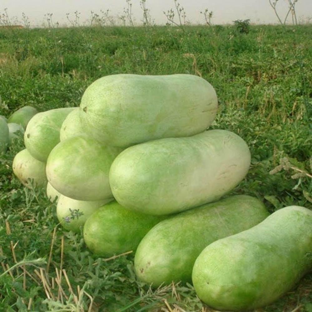 بذور البطيخ