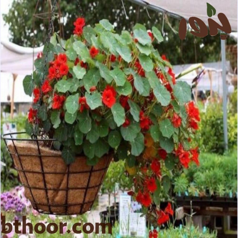 زهور ابو خنجر