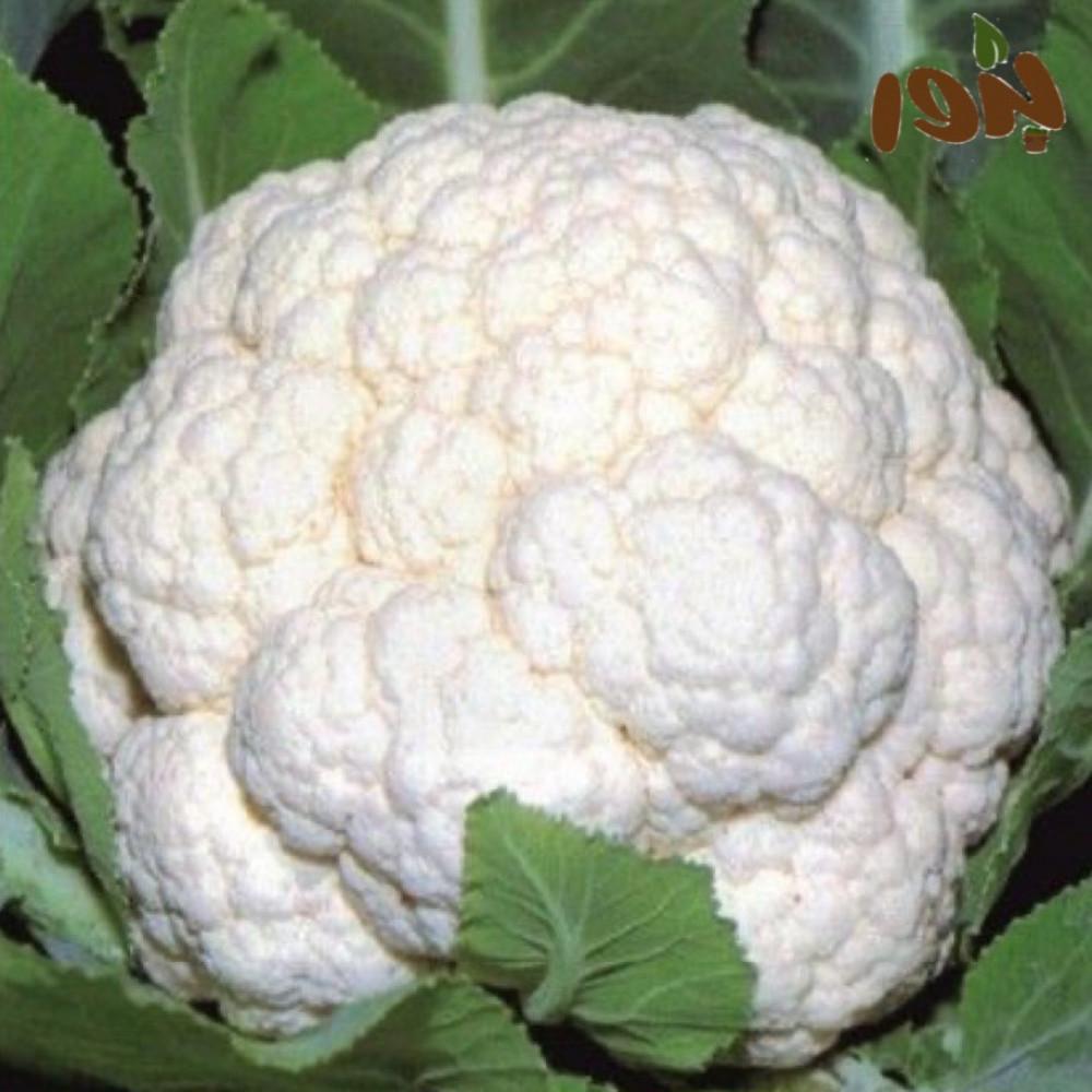 بذور الزهرة البيضاء-متجر بذو الزراعي