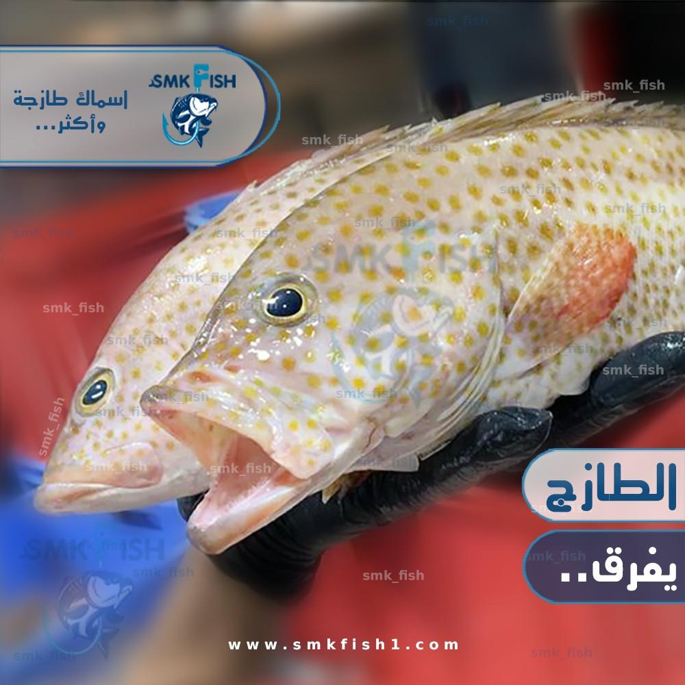 القصف ساطع خدمة النقل طريقة تنظيف سمك الهامور Diysparks Com