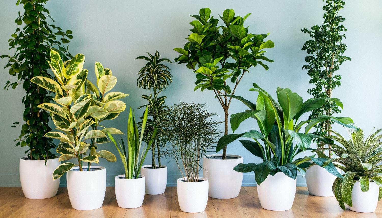 بذور النباتات الداخلية